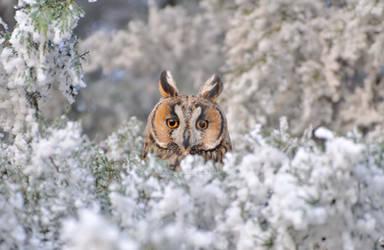 Owl loving the snow time