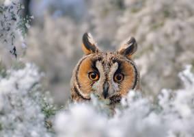 Long eared owl in a fantasy world