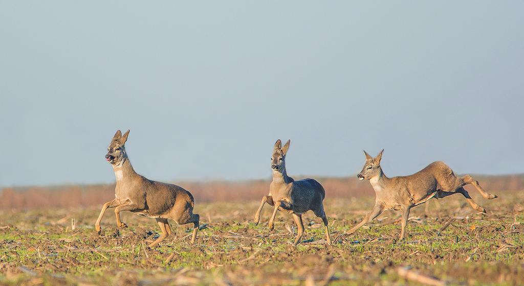 Deers by missfortune11