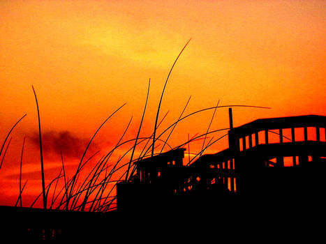 Grass Sunset