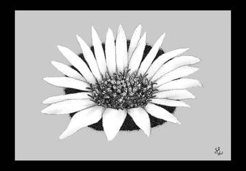 Osteospermum in Archival Ink by noblewebs