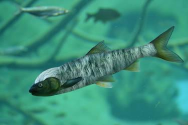 Fuzzy Fish