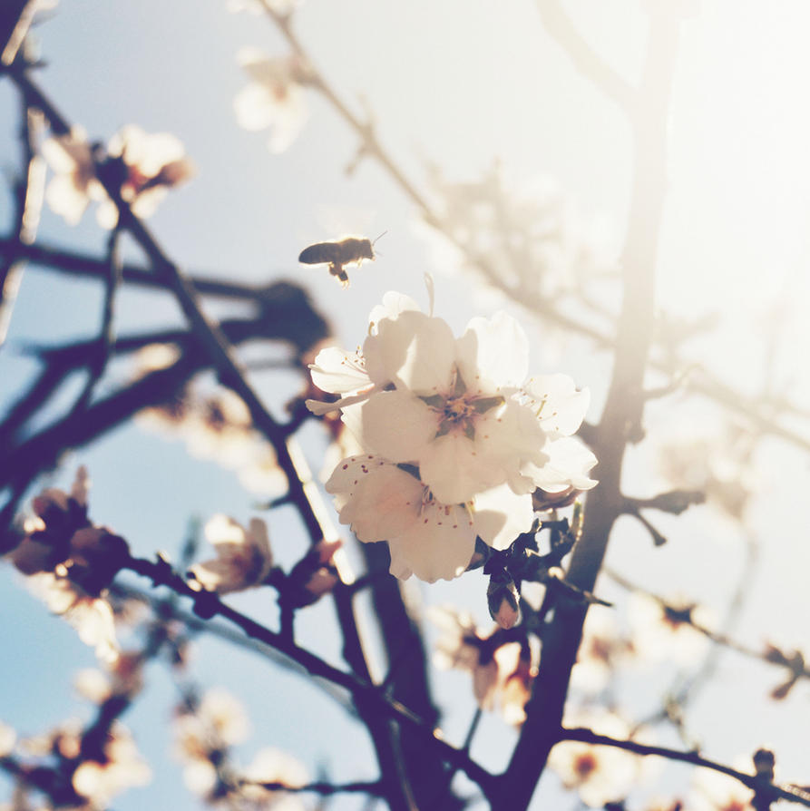 Sunny days by fireandrain97