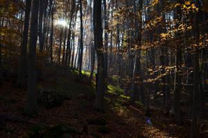 Magic Forest by SandBG