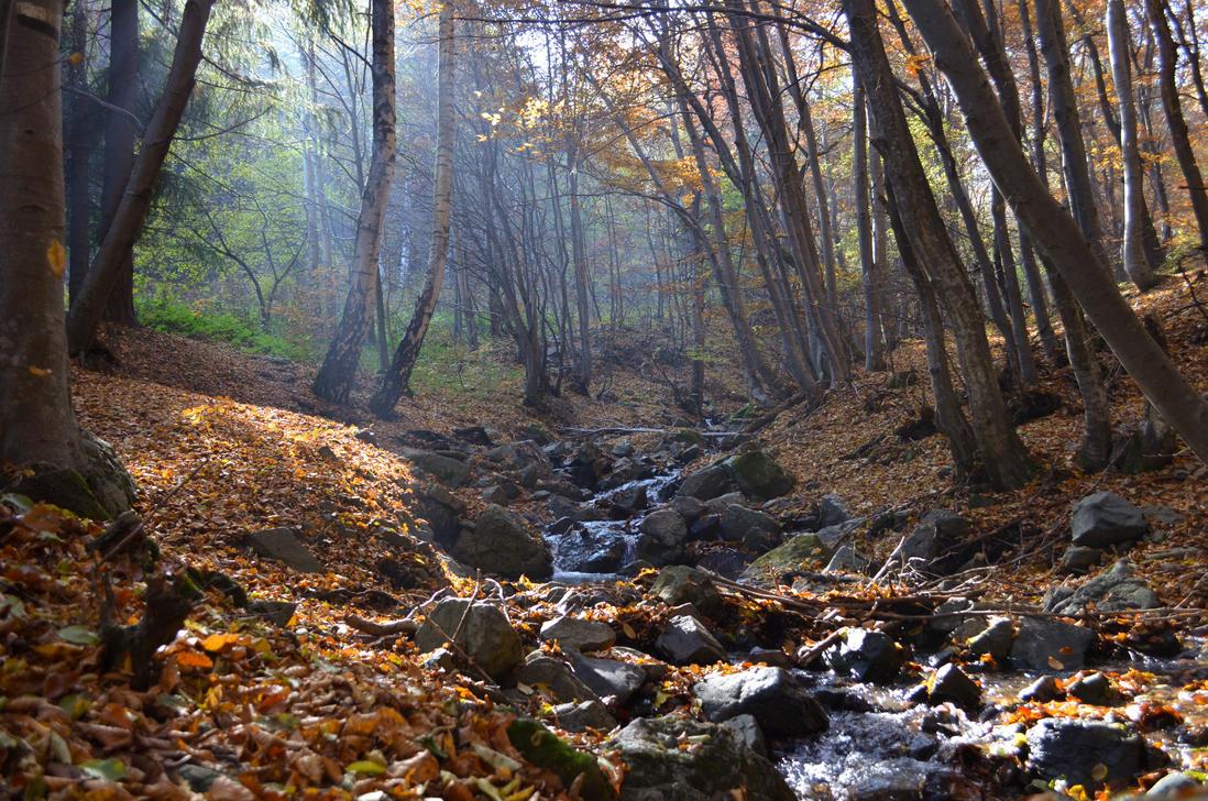 Forest Stream by SandBG