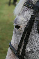 Munchie close up by psngirl