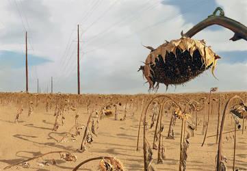 Sunflower Power by kennyc