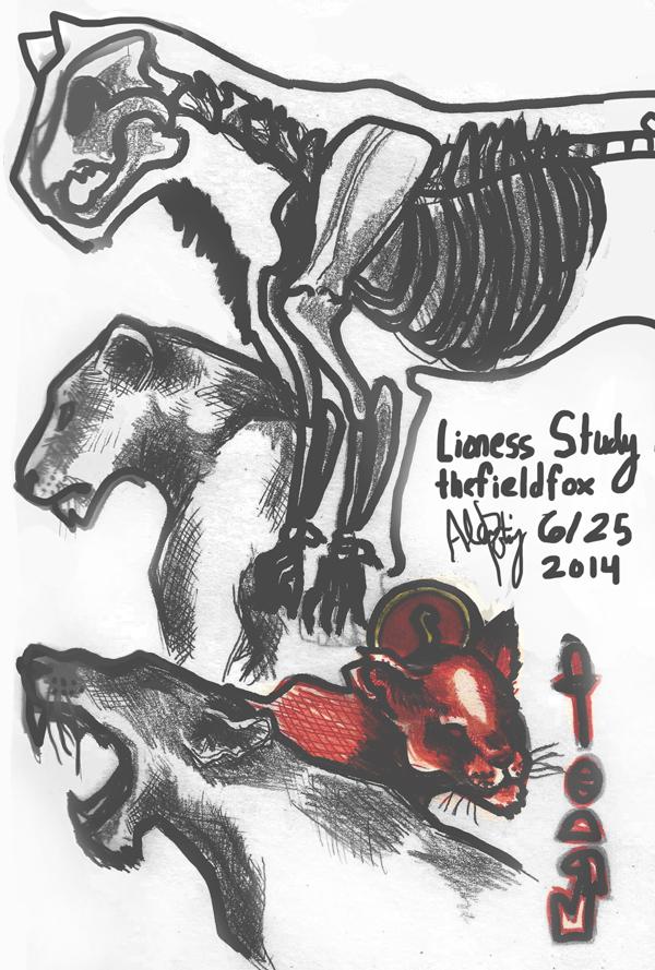 lioness study 6/25/14 by thefieldfox