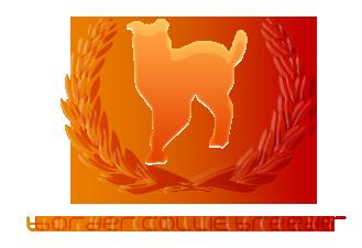 Border Collie Breeder Logo by AyaSolari