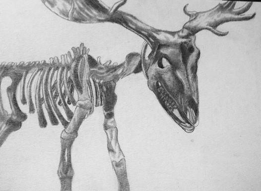 Irish Elk Skeleton by BEN13th