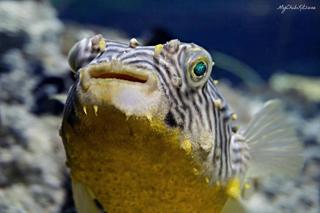 Pufferfish by MyChibiKitsune