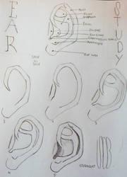Step By Step Human Ear Study