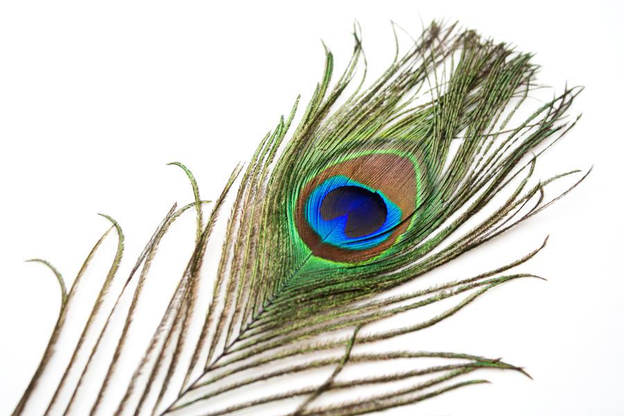 Peacock Feather 1 By HKPasseyStock On DeviantArt