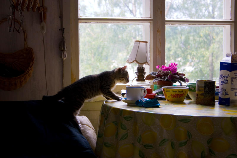 Coffee Time for Cats by ace-of-finland