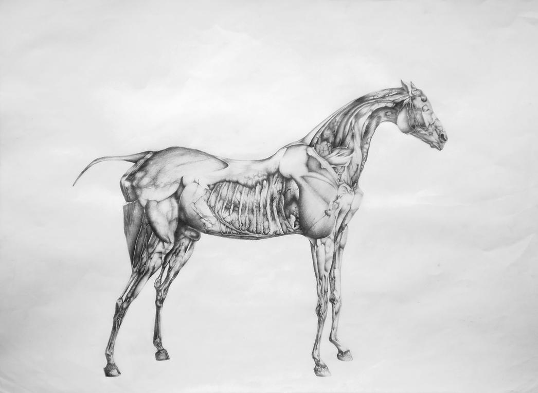 Horse Anatomy, by George Stubbs by Moochki on DeviantArt