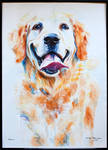 Golden retriever by JIIP33