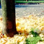 fall 2005 pdx