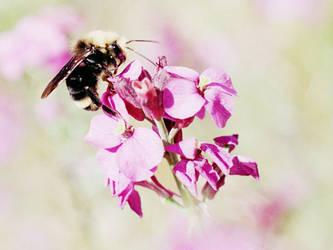 your busy neighborhood bee