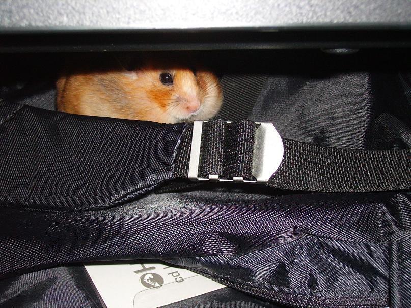 In hiding... by Ally-sun