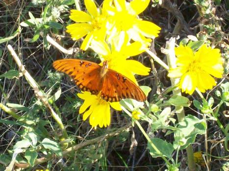 Buttertfly 1