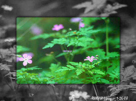 Forest Flower Aero Color