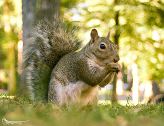GET THE SQUIRREL by DanOstergren