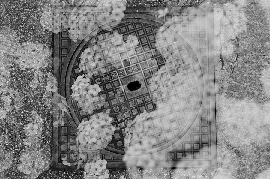 Film - XXX - Manhole Flowers by Picture-Bandit