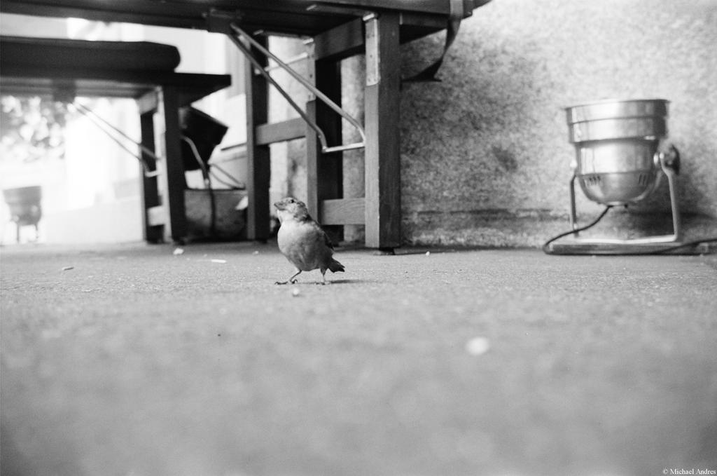 Film - XCVIII - little bird by Picture-Bandit