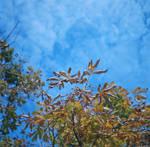 Alpha - Kodak - autumn sky by Picture-Bandit