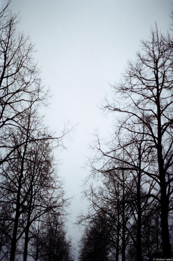 Color Twenty-Six - bleak trees by Picture-Bandit