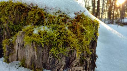 Frozen Moss