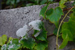 Paint splatted leaves