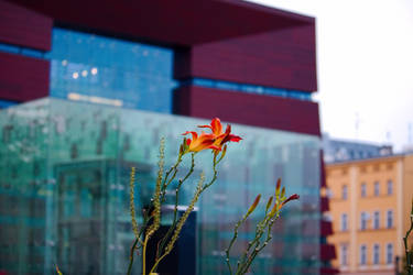 Flowers next to the National Forum of Music by Fautex