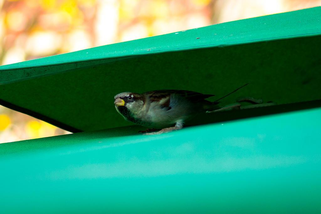 Hiding sparrow by Fautex