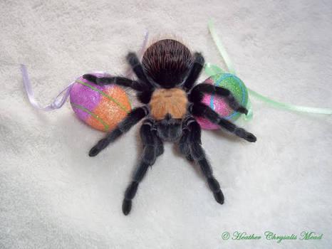 A SPIDER CELEBRATES EASTER
