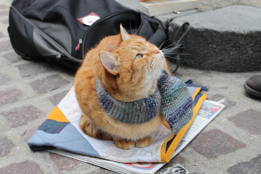 Bob The Cat by harriscraft