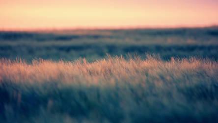 Field by DJMattRicks