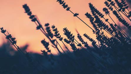 Dawn by DJMattRicks
