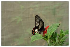 Butterfly IX by rudeboyskunk