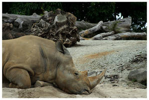 Rhinoceros by rudeboyskunk