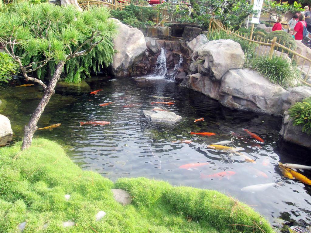 Fish Pond by kenrostudio