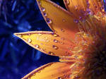 Beautiful flower with raindrop