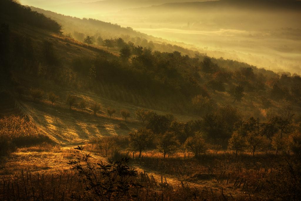 Morning Light by spaicro