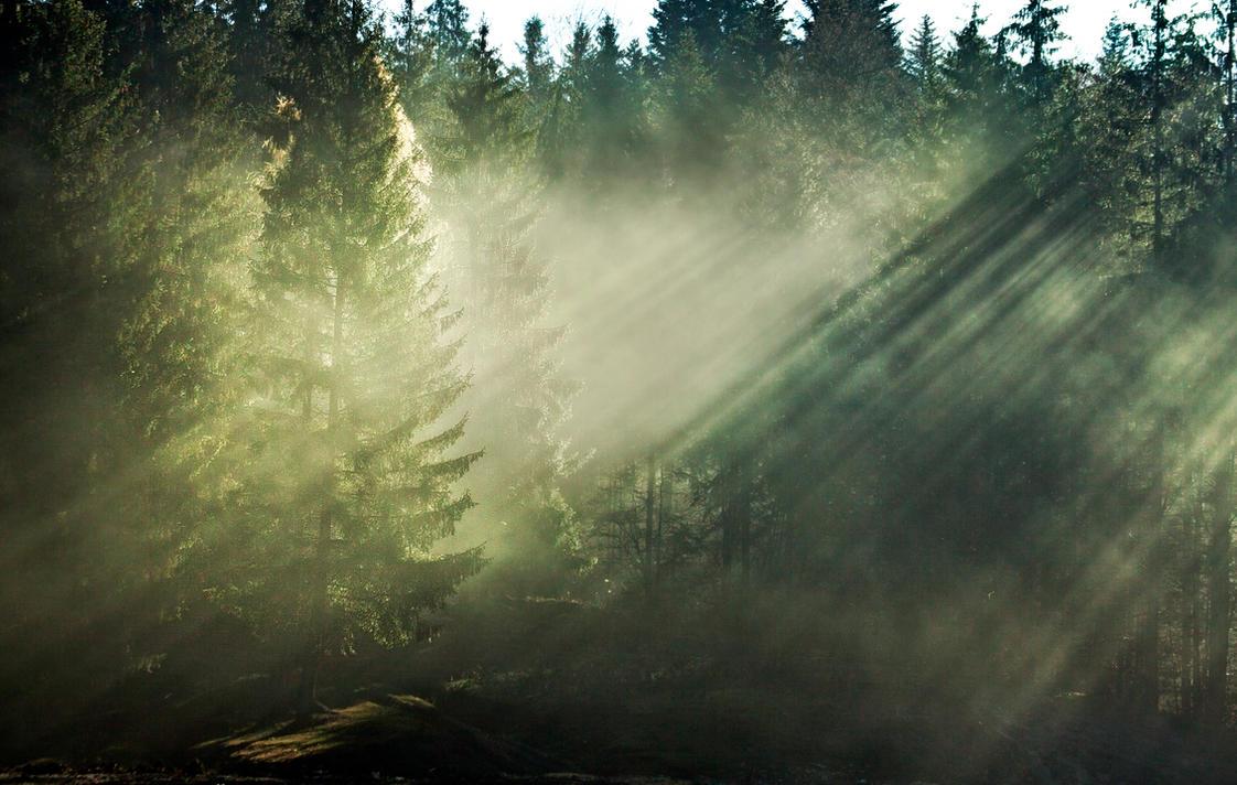 Mist by spaicro