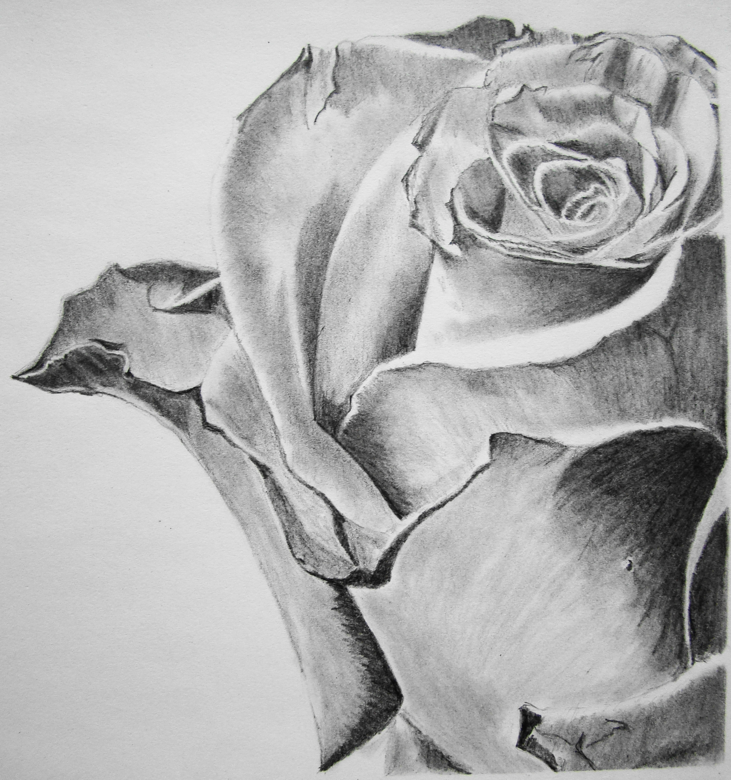 Pencil Drawings & other on Pinterest | Pencil Drawings ...