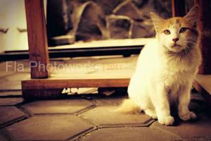 confused cat? by fellamahardika