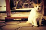 confused cat?