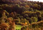 Melancholy of the autumnII