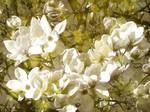 Awakening of blossoms