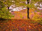 enchanting nature2